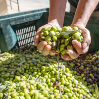 Olivenöl und Essig